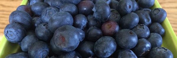 Blog Blueberries for Your Waistline